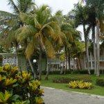 lush vegetation - so tropical