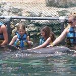 Foto de Dolphin Discovery Puerto Aventuras