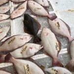 Nakaminato Fish Market Foto