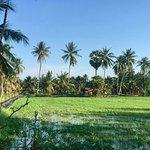 Sookjai Organic Farm Tour - paddy fields