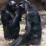 Foto de Frankfurt Zoo (Zoologischer Garten Frankfurt/Main)