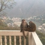 Foto de Bhandari Swiss Cottage
