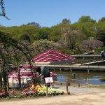 Photo of Ashikaga Flower Park