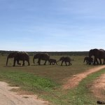 Photo of Addo Elephant National Park