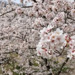 Photo de Kaikoen Garden