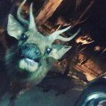 Photo de Chiang Mai Night Safari