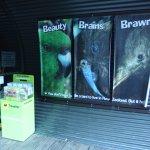 Photo of Kiwi Birdlife Park