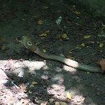Photo of Snake Farm (Queen Saovabha Memorial Institute)