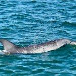Photo de Dolphin Discovery Centre