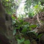 Krohn Conservatory plants