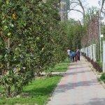 Rudaki park in spring