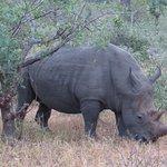 At last - the elusive rhino