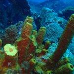 Antilla site