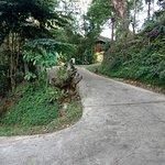 A path at the resort