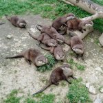 Foto de Tamar Otter and Wildlife Centre