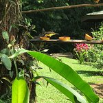 Photo de Chachagua Rainforest Eco Lodge