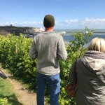 My son and his wife seeing the White Cliffs of Dover for the first time.