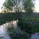 Cool Spring Preserve