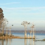 Enjoy our famous view of Lake Eustis and its non-human inhabitants.