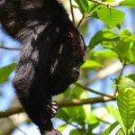 Foto di Howler Monkey Resort