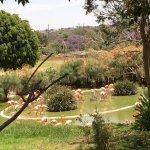 Photo of Africam Safari