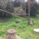 Foto di Twycross Zoo