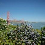 Golden Gate y flores azules