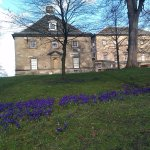Crocuses by the old kitchen block.