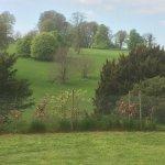 Highclere Castle Foto