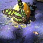 Sitting on a orange drinking the nectar