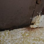 Bathroom Door with mold and wood rot