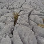 Photo de The Burren National Park