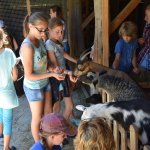 Some of our students had never seen a goat live.