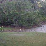 Photo de Belize Zoo Jungle Lodge/Tropical Education Center