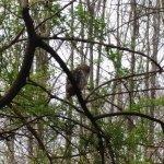 Owl in Bog Garden across street from Tanger Family Bicentennial Garden.  A pair of owls nest in