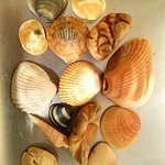 Some shells I collected one day