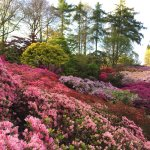 The famous 'Punch Bowl', about 15mins walk in from Savill Gardens car park.