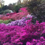 Fabulous display at the Punch Bowl, Valley Gardens, Windsor Great Park.