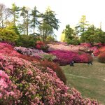 Punch Bowl, Valley Gardens, Windsor Great Park.