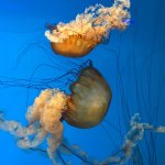 Photo de National Aquarium, Baltimore