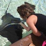 Feeding a bat ray