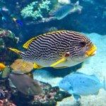Aquarium de Nouméa