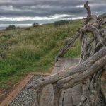 Foto di Fiscalini Ranch Preserve