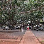 visited the Banyan Tree during a festive celebration and fundraiser. When it's a hot day at Maui
