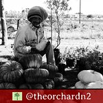 The Orchard Farm Stall - Monthly farmer's market