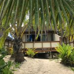 Palm Grove Photo