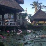 Lotus pond by the Karsa Cafe