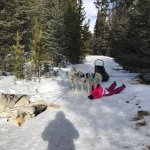 Photo de Snowy Owl Sled Dog Tours