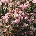 Some beautiful April blooms