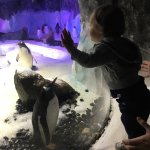 Jake loved the penguins, and I think this penguin liked him even more.